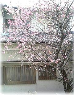 春よ来い!_d0070316_1631478.jpg