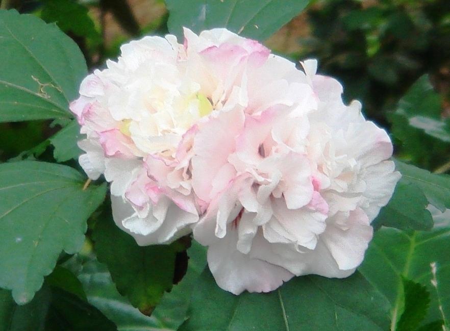 名も知らぬ花その2_f0155522_839753.jpg