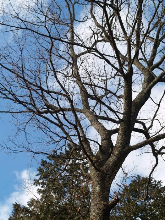 樹_c0116915_18244781.jpg