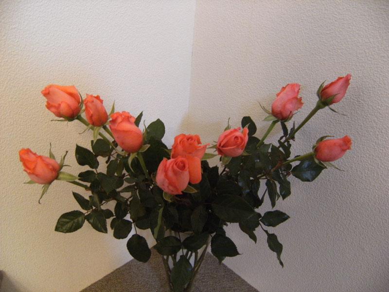 薔薇の館_d0109415_2243633.jpg