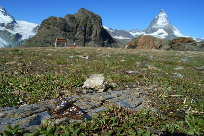 スイスの花と蝶2007(5) ゴルナーグラート展望台①_d0054625_22521846.jpg