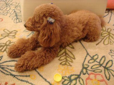 2008.2.2  なな茶々のおもちゃ_a0083571_18393342.jpg