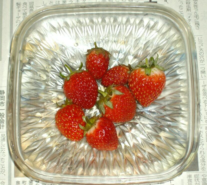イチゴのマルチかけ _f0018078_17491053.jpg