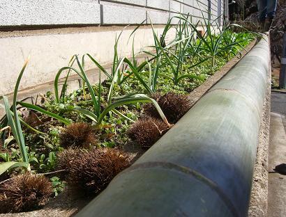 家庭菜園_b0105897_22245497.jpg