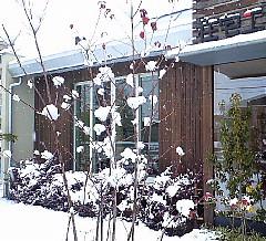 大雪と小道具_c0039501_11412990.jpg