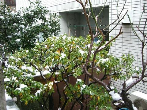 その後の雪_a0057402_15261279.jpg