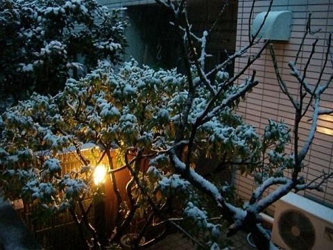 雪になった_a0057402_6543116.jpg