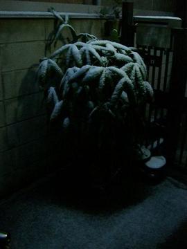 雪になった_a0057402_713263.jpg