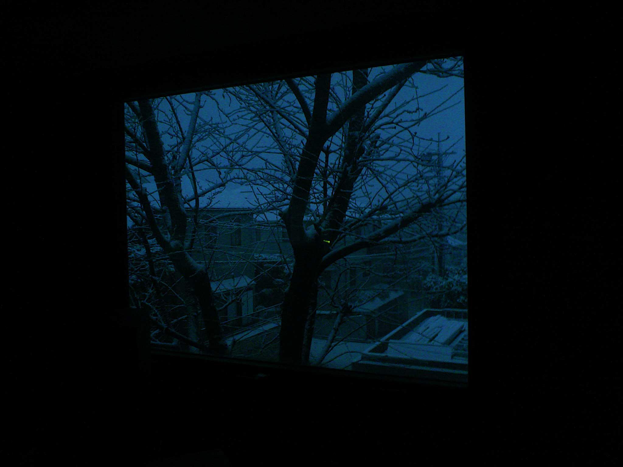 東京も雪_b0060102_774645.jpg