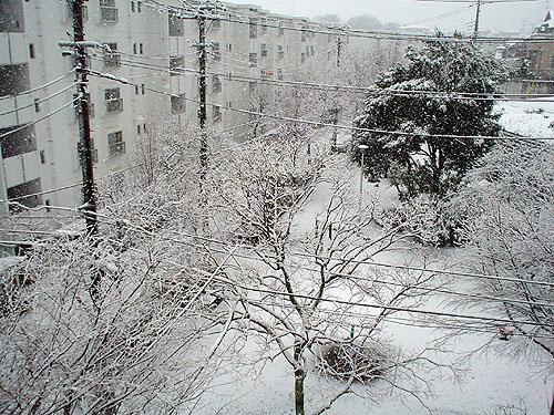 雪_c0137404_11444137.jpg