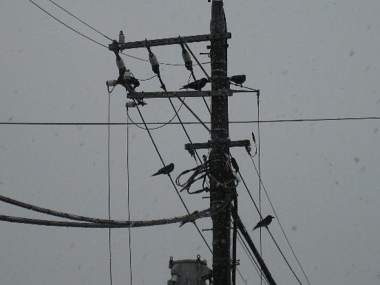また雪景色・・・_f0141609_144561.jpg