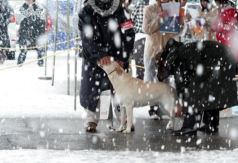 雪が降るドッグショー_d0151813_18571237.jpg