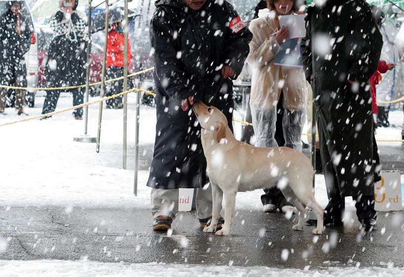 雪が降るドッグショー_d0151813_18584725.jpg