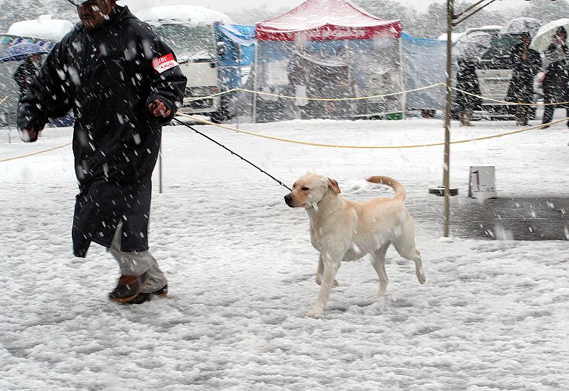 雪が降るドッグショー_d0151813_1915156.jpg