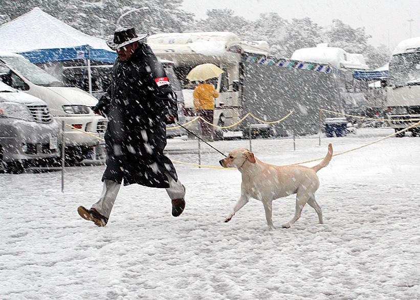 雪が降るドッグショー_d0151813_1992722.jpg