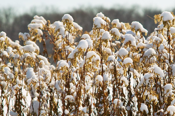 雪をかぶり…_e0117517_7415864.jpg