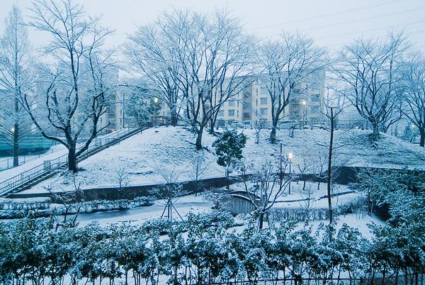 雪をかぶり…_e0117517_7423285.jpg
