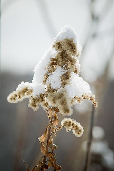 雪をかぶり…_e0117517_742983.jpg