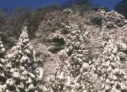 雪景色_a0101923_19445141.jpg
