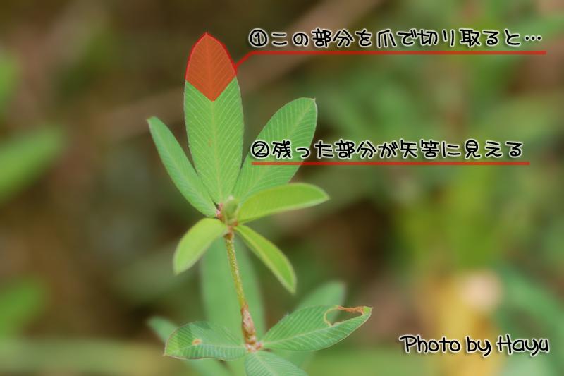 a0059328_0175257.jpg