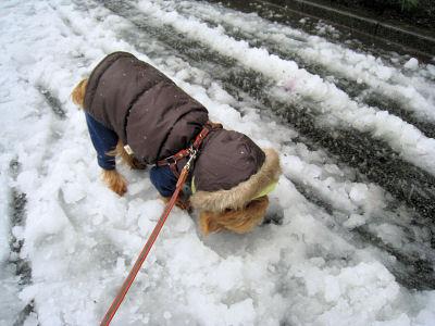 """何も雪の上を歩かなくてもね!"""""""