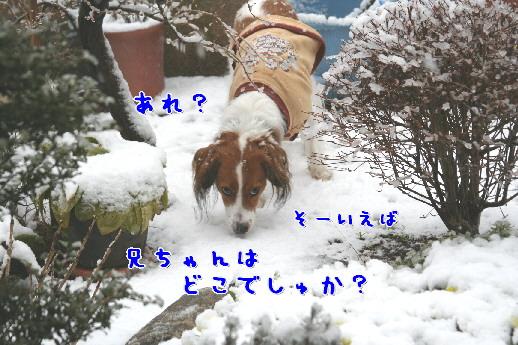 d0013149_10183327.jpg