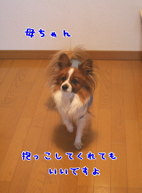 d0013149_10202794.jpg