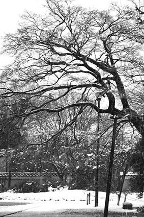 東京は雪景色_a0086851_200327.jpg