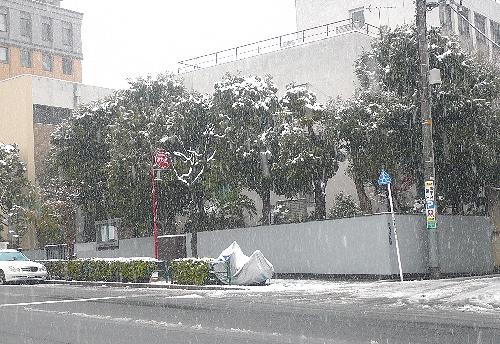 """節分 に 忘れ雪 ☆ 。。。""""福は~内、鬼は~外!""""♡o.+゚。*・。♡o☆*_a0053662_17251359.jpg"""
