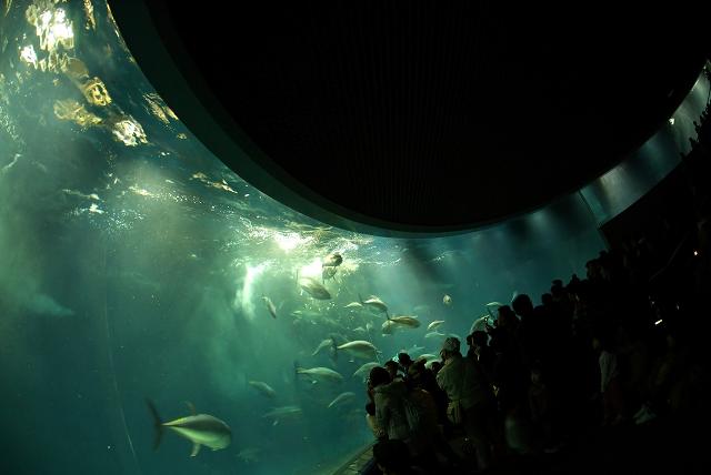 回遊魚水槽_f0018464_775464.jpg