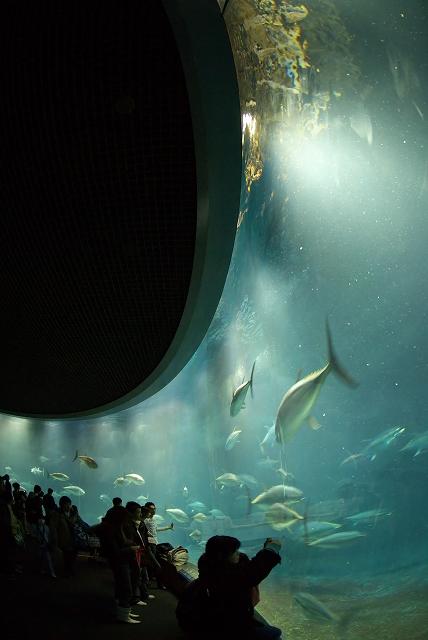 回遊魚水槽_f0018464_785295.jpg