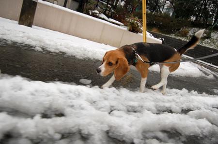 Let it snow! Let it snow! Let it snow!_b0035072_17503110.jpg