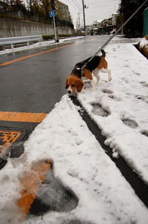 Let it snow! Let it snow! Let it snow!_b0035072_17504148.jpg