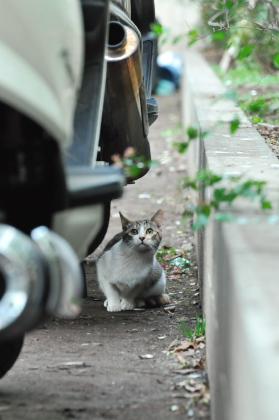 見上げる猫ってイイね。_e0123176_17495279.jpg