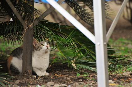 見上げる猫ってイイね。_e0123176_17501796.jpg