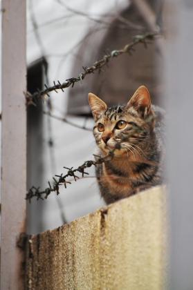 見上げる猫ってイイね。_e0123176_17504439.jpg