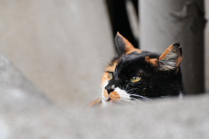 見上げる猫ってイイね。_e0123176_17511195.jpg