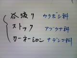 b0055385_193103.jpg