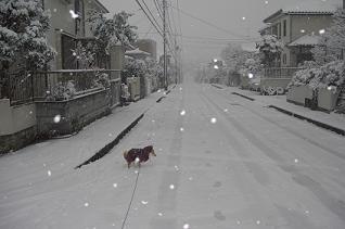 積雪_e0023790_14303511.jpg