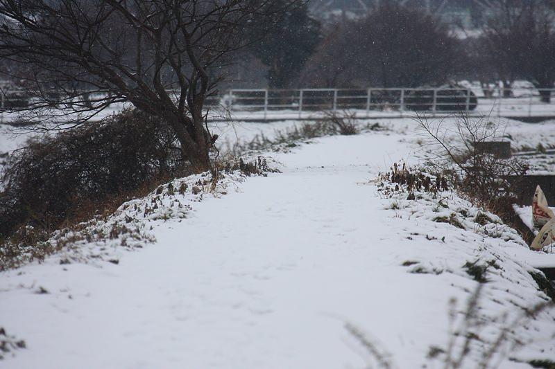 速報/雪のMFと野鳥たち_b0024798_14384369.jpg