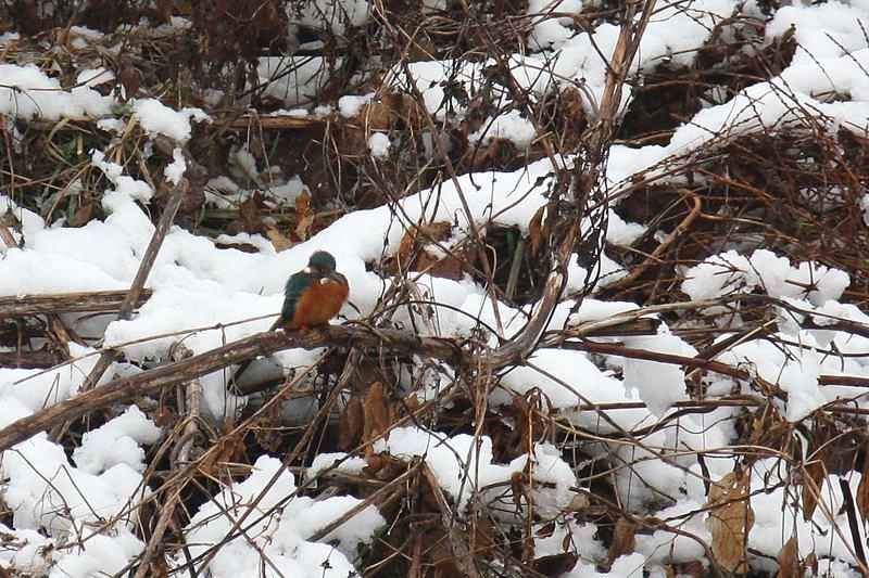 速報/雪のMFと野鳥たち_b0024798_1439253.jpg