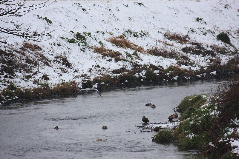 速報/雪のMFと野鳥たち_b0024798_1439739.jpg