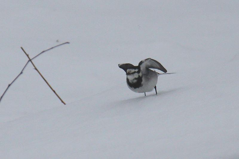 速報/雪のMFと野鳥たち_b0024798_14401258.jpg