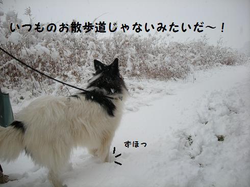 f0081100_23301341.jpg