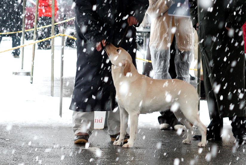 雪が降るドッグショー_d0151813_0121445.jpg