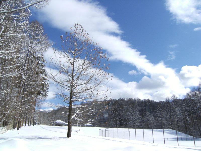 抜けるような空の青さとサラサラでクリーミーな雪_d0109415_12565730.jpg