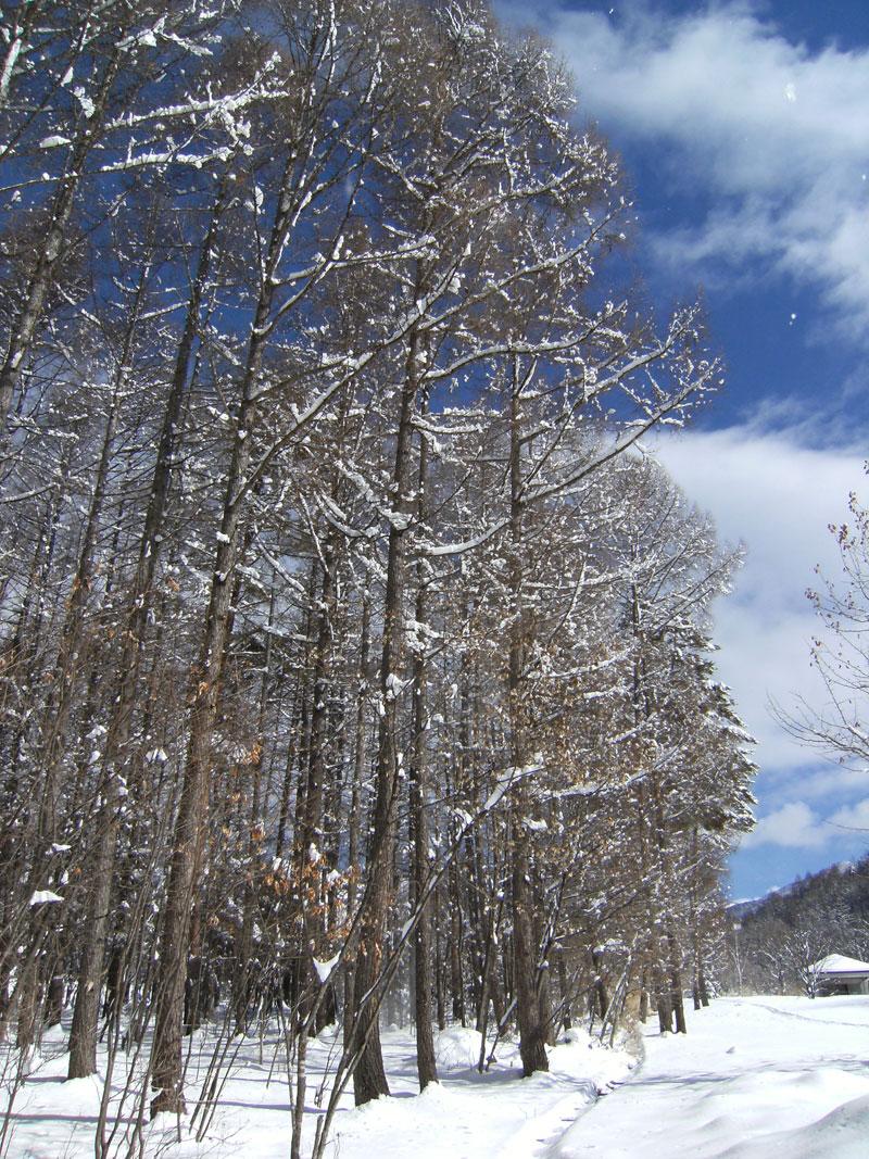 抜けるような空の青さとサラサラでクリーミーな雪_d0109415_12572121.jpg
