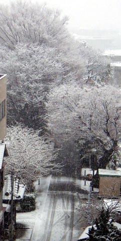 真冬→立春→春節_d0106242_1351586.jpg