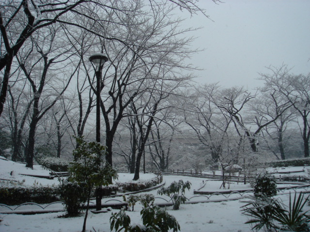 雪景色と小ネタ_f0077051_121012.jpg