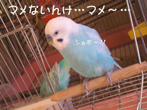 f0132055_0494136.jpg